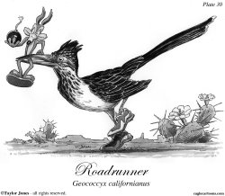 Roadrunner by Taylor Jones