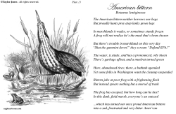Taylor Jones Field Guide for the Birds - Plate 13 by Taylor Jones