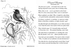 Taylor Jones Field Guide for the Birds - Plate 16 by Taylor Jones