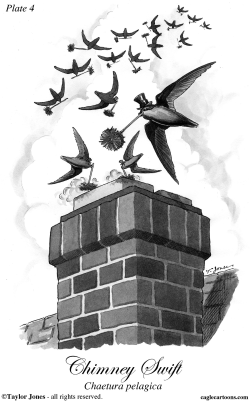 Chimney Swift by Taylor Jones