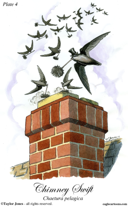 Chimney Swift -  by Taylor Jones