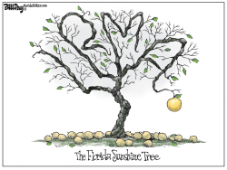 Sunshine Tree by Bill Day