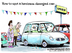 Hurricane-damaged cars by Dave Granlund