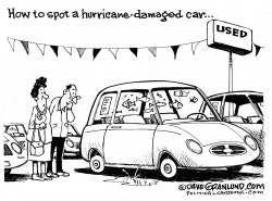 Hurricane- damaged cars by Dave Granlund