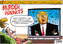Murder Hornets are here! by Dave Whamond